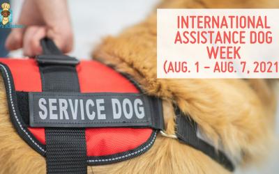 Celebrate International Assistance Dog Week (aug. 1 – Aug. 7, 2021)